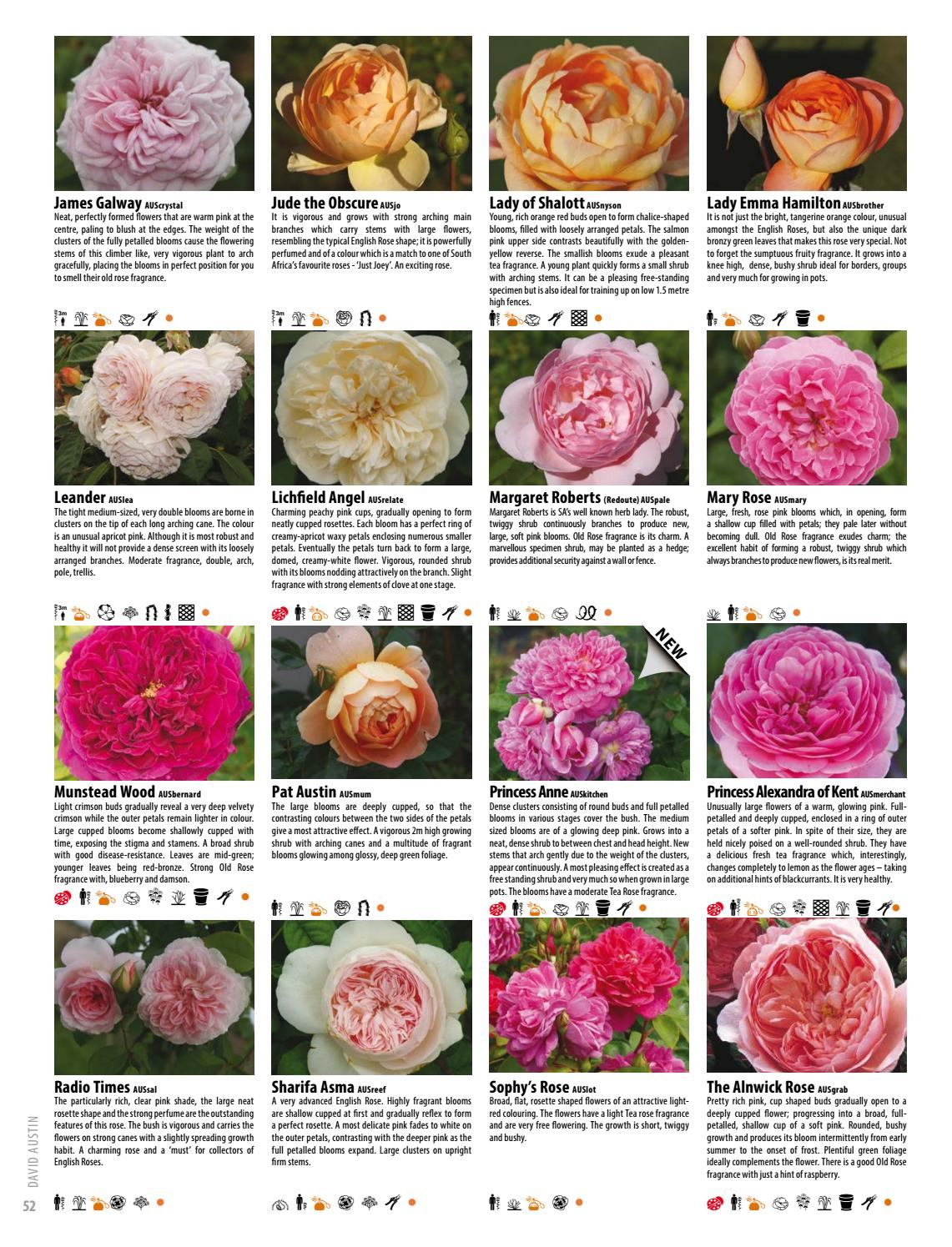 2017 18 Ludwigs Roses Catalogue By Anja Taschner Issuu