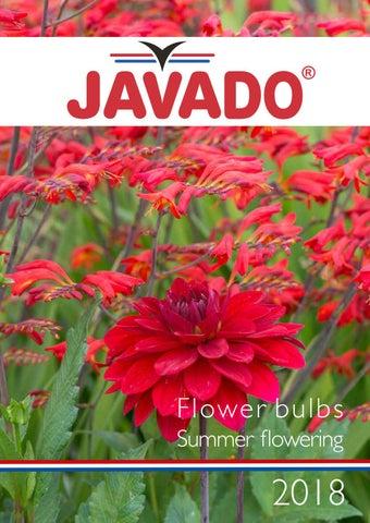 16 graines Fleur-Paeonia delavayi