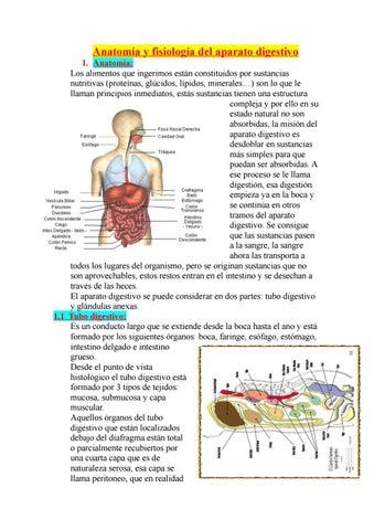 anatomia y fisiologia del aparato digestivo by Ayala Nuñez Miriam ...
