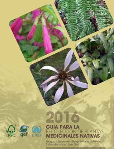 hierbas para adelgazar rapido en chile cae