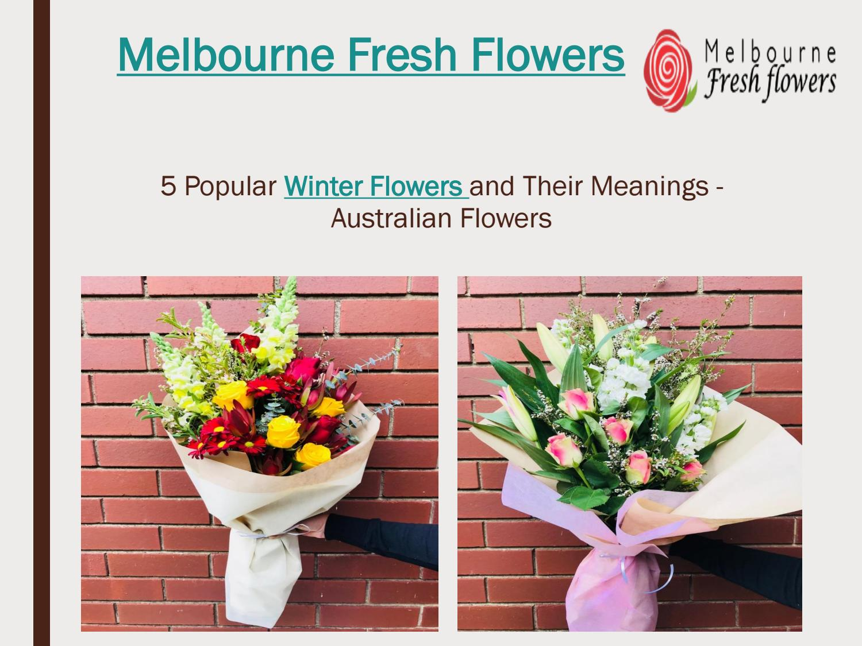 Send winter flowers to australia melbourne fresh flowers by fresh send winter flowers to australia melbourne fresh flowers by fresh flowers issuu izmirmasajfo
