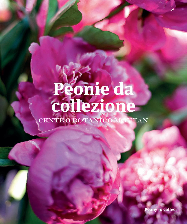 Peonie da collezione centro botanico moutan by ethimo for Peonie periodo