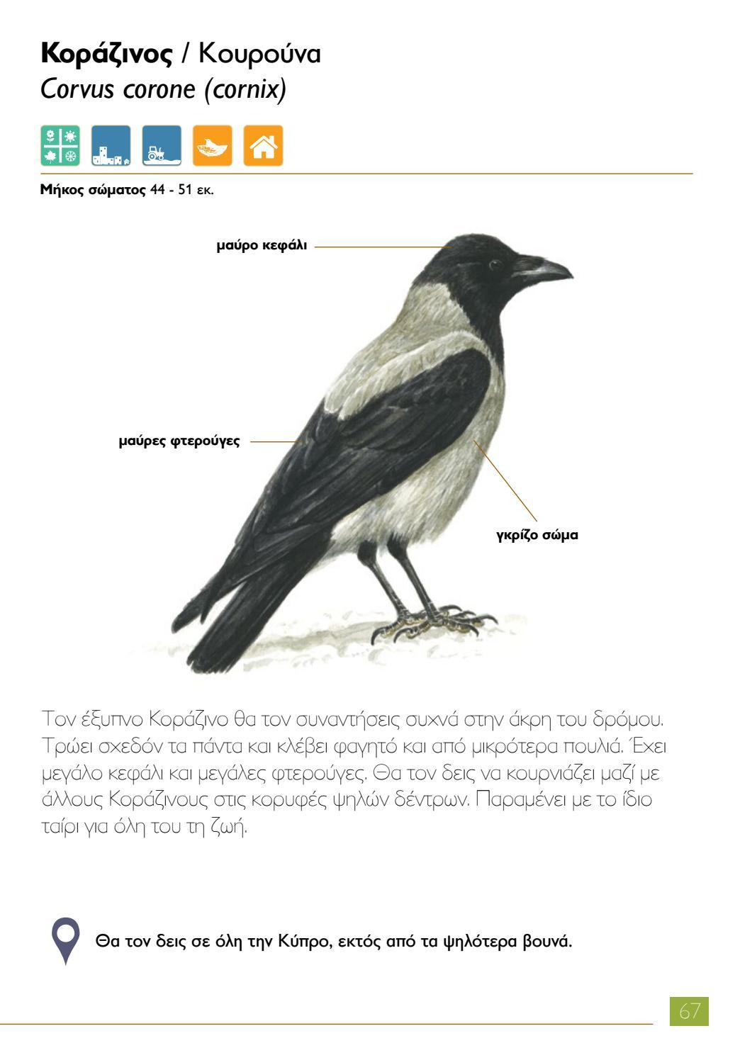 ένα μεγάλο μαύρο πουλί βυζιά τσιμπούκια φωτογραφίες