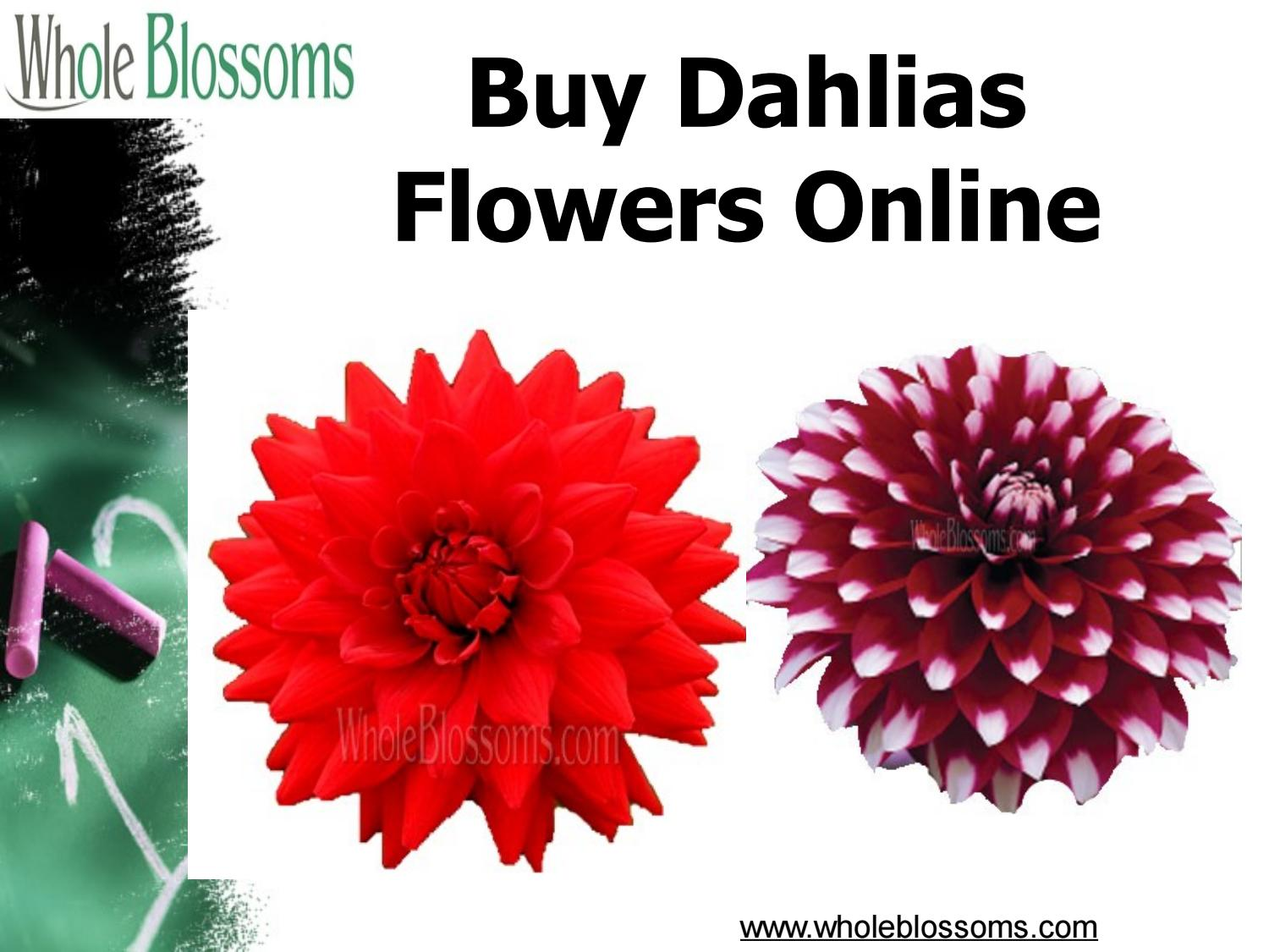 Buy Dahlias Flowers Online Wholeblossoms By Www