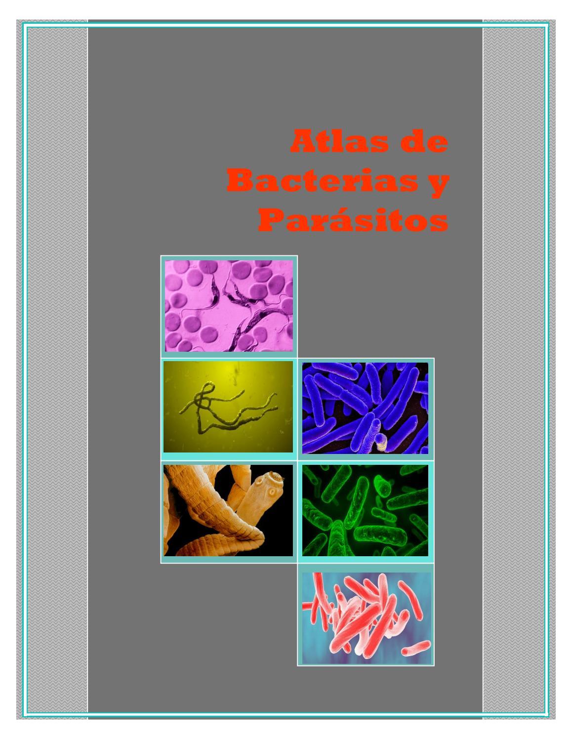 gusano parásito ácaros bin ácaros rojos