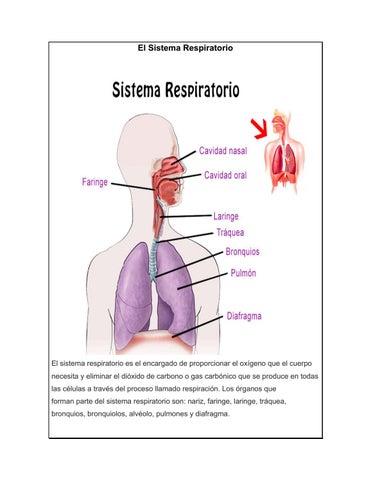 El sistema respiratorio by Karen Campos - issuu