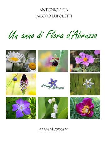 Arbusto Boschivo Dai Fiori Gialli.Un Anno Di Flora D Abruzzo By Flora D Abruzzo Issuu
