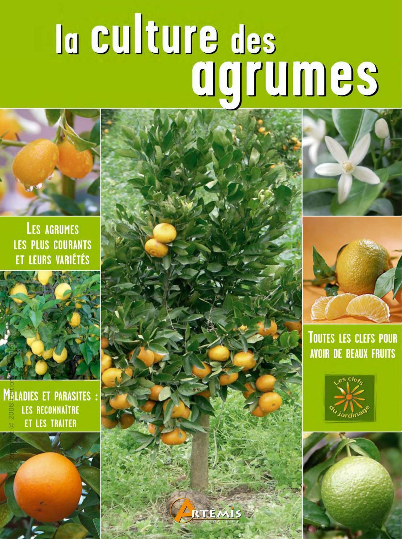 5 graines fraîche cette Saison De Récolte de mon jardin Ruby Pamplemousse