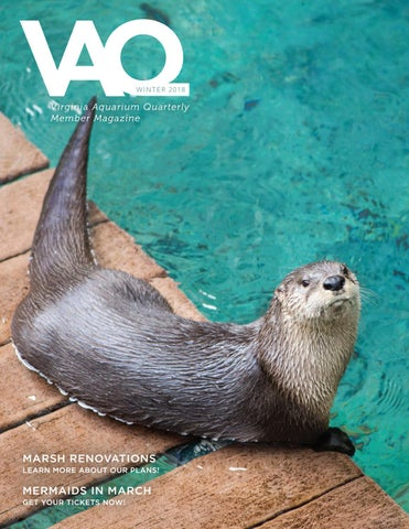 Winter 2018 VAQ by Virginia Aquarium - issuu