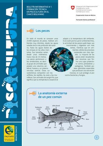Boletin piscicultura 01 by Albert Chavez - issuu