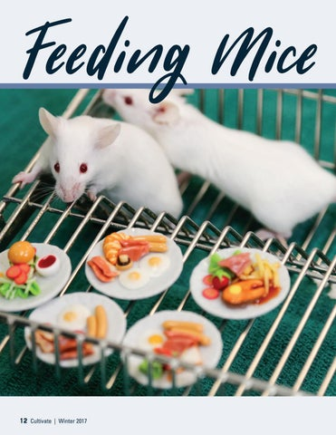 Page 12 of Feeding Mice More Like People