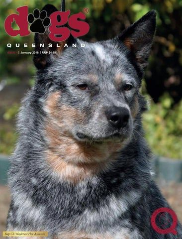 Dogs queensland the queensland dog world issue 3 march 2017 dogs queensland the queensland dog world issue 1 january 2018 solutioingenieria Gallery