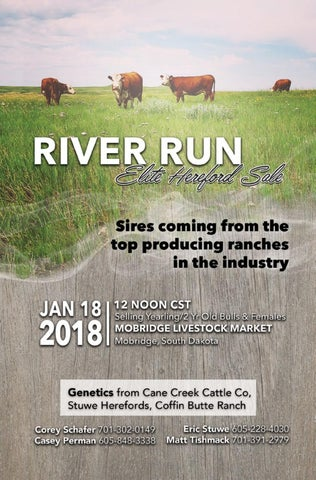 River Run Elite Hereford Sale by American Hereford