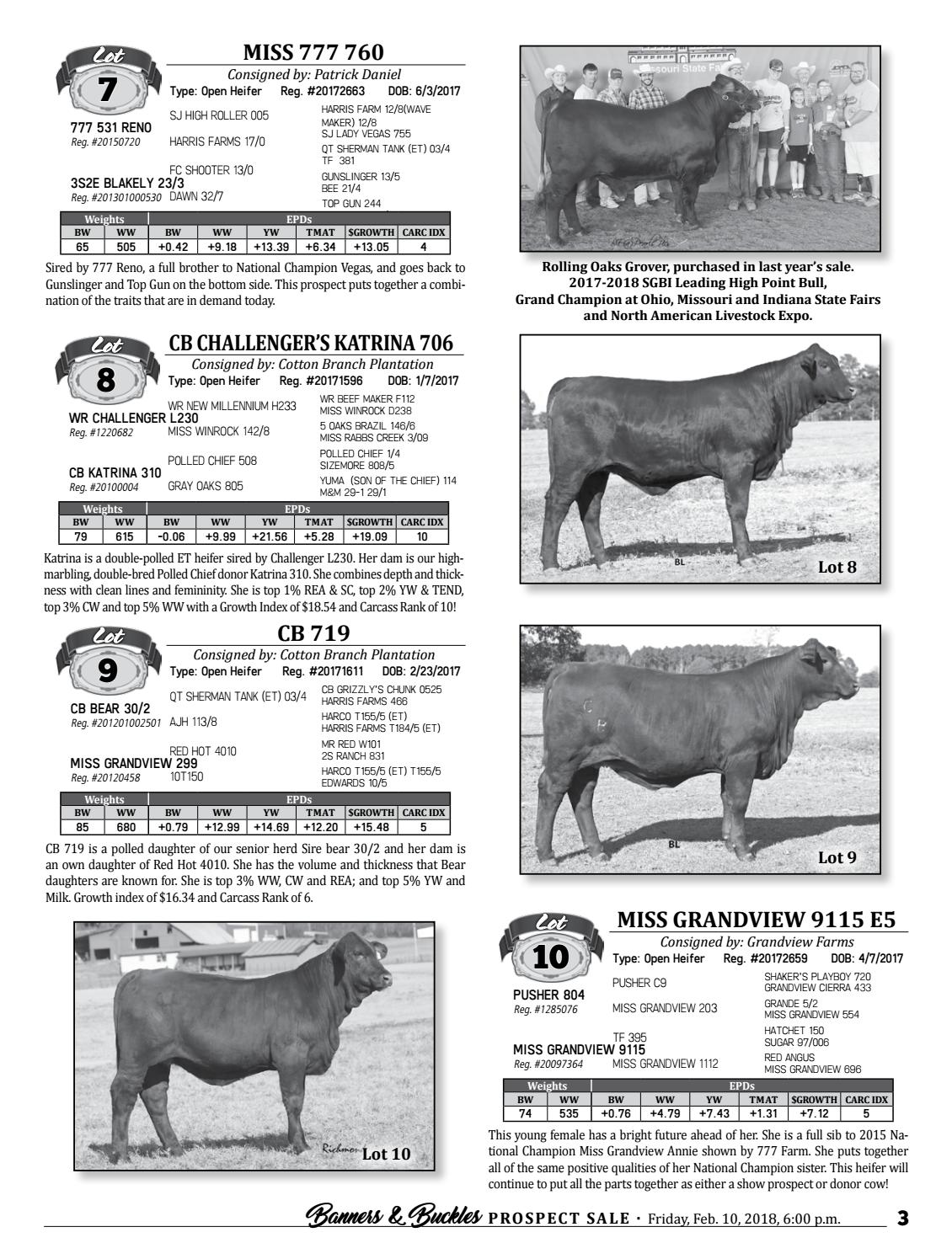 Banners and Buckles Santa Gertrudis Prospect Sale by Cattle In