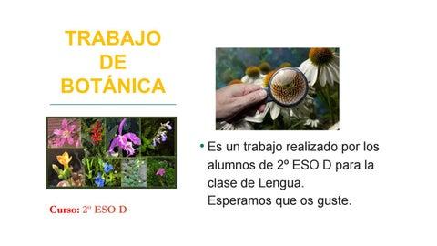 Trabajo de botánica by IES Puerta de Cuartos - issuu