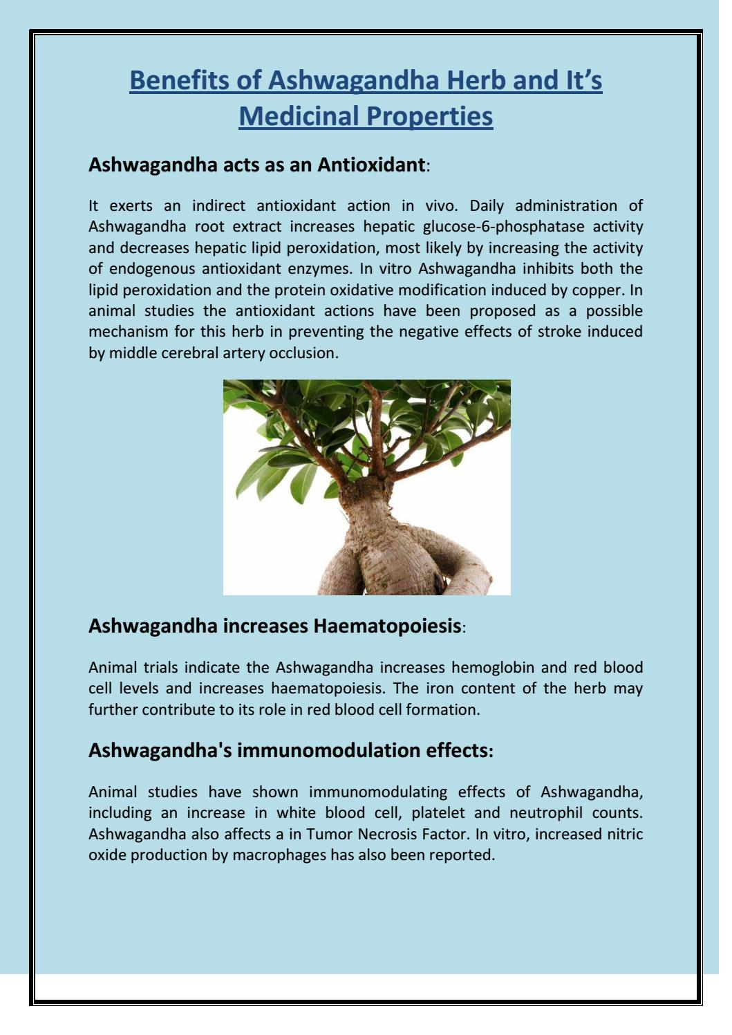 Benefits of ashwagandha herb and it's medicinal properties