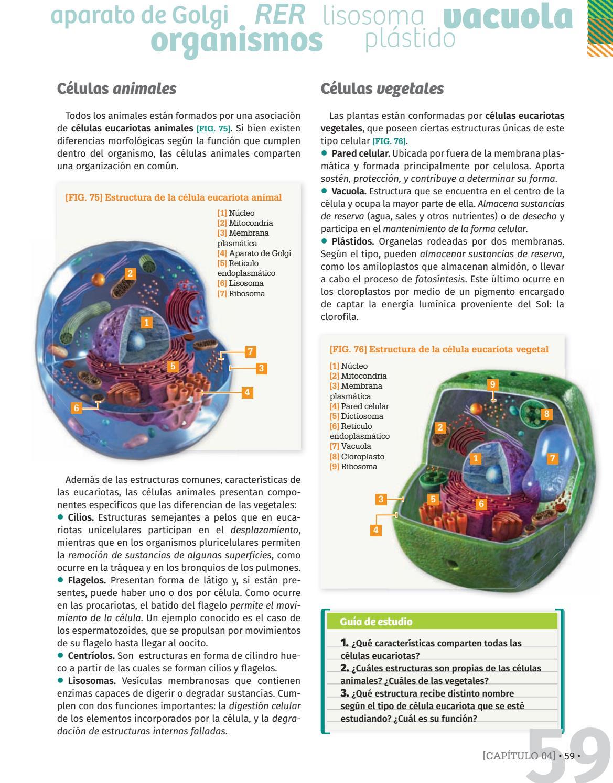 Biologia 2 Serie Llaves Recorre El Libro By Mandioca