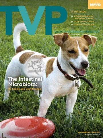 44401ac9ea3 Today's Veterinary Practice, September 2017 by davidpsu - issuu