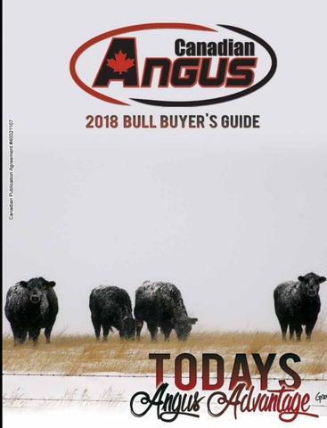 Canadian Angus Winter 2018 by Today's Publishing Inc  - issuu