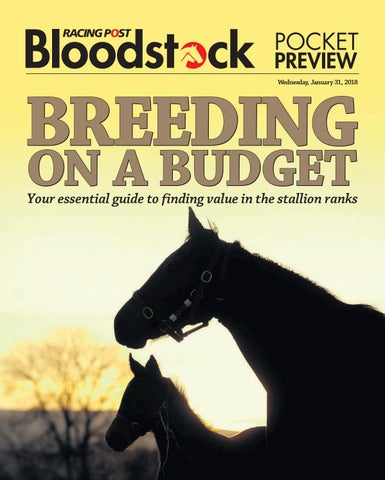 feda9f4a7d Breeding on a budget by RACING POST BLOODSTOCK - issuu