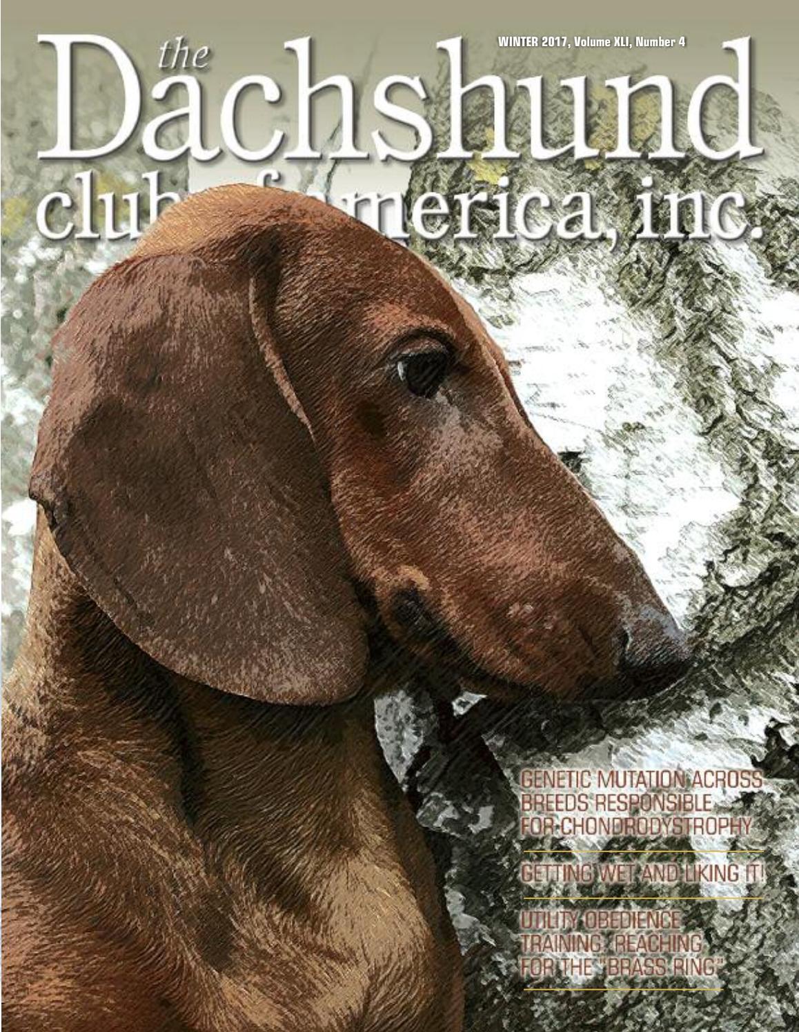 dfd8cf811 Winter 2016 Dachshund Club of America by Lynne Dahlen - issuu