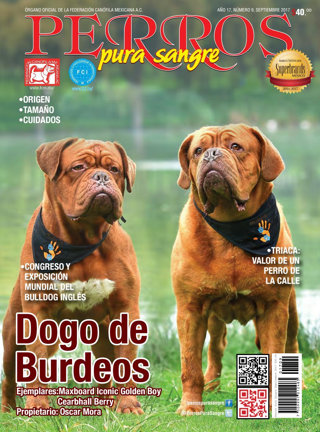 Revista Perros Pura Sangre. Septiembre 2017. Dogo de Burdeos. by ...