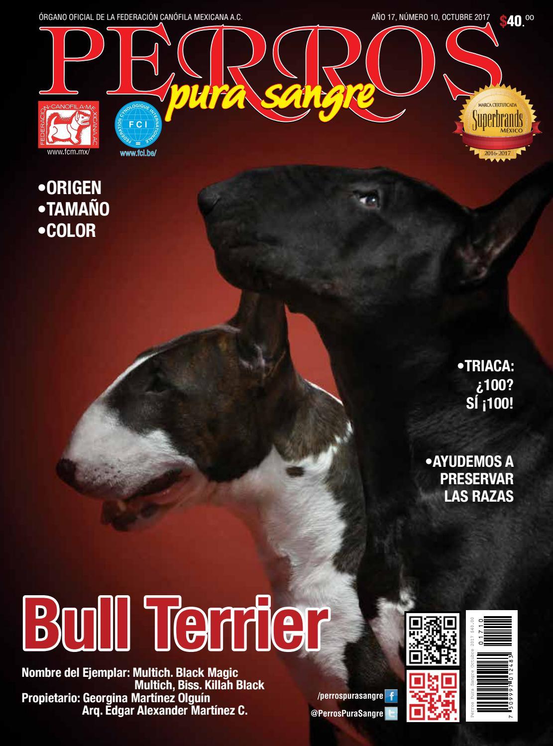 Revista Perros Pura Sangre. Octubre 2017. Bull Terrier. by EDITORIAL ...