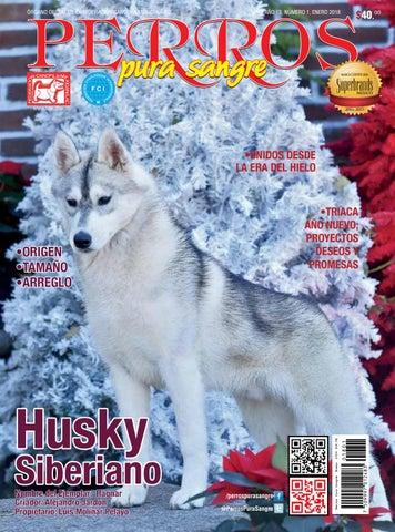 Husky pelo corto precio