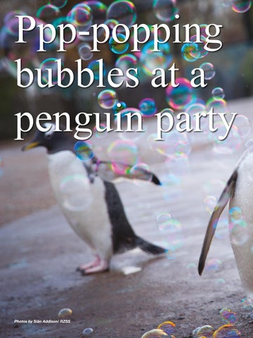 Page 74 of Ppp-popping bubbles at a penguin party.