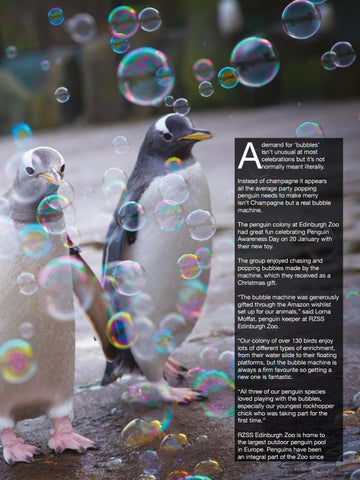 Page 75 of Ppp-popping bubbles at a penguin party.
