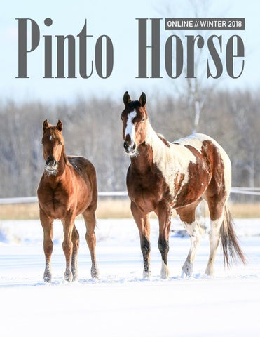 PtHA® Online Magazine - Winter 2018 by Pinto Horse