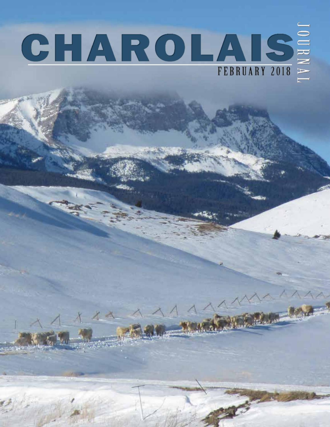 Charolais Journal By Edje Issuu Diamond Plain Fresh Milk 949 Ml