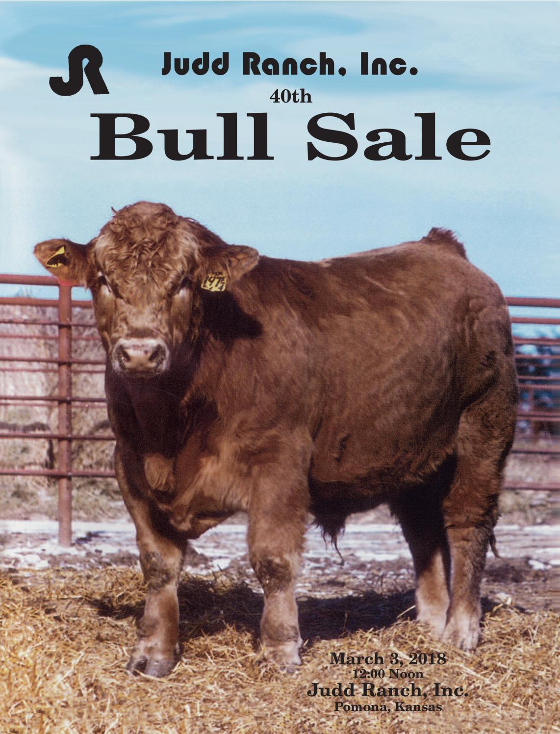 cattle bone Saddle Blank 83 x 8 x 2.4
