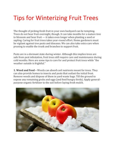 Tips For Winterizing Fruit Trees Great