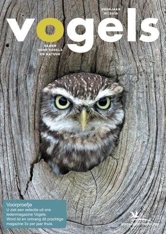 Kleurplaten Watervogels.Vogels Voorjaar 01 2018 By Vogelbescherming Nederland Issuu
