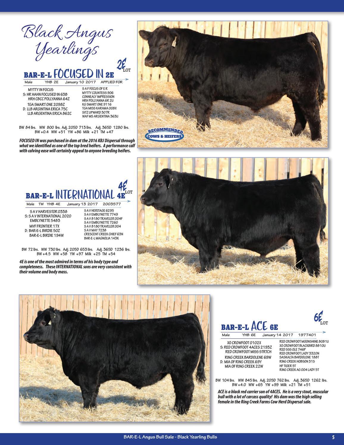 Bar-E-L Angus Bull & Female Sale by Today's Publishing Inc  - issuu