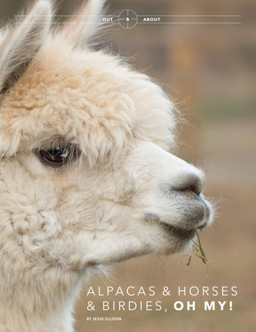 Page 24 of Alpacas & Horses & Birdies, Oh My!