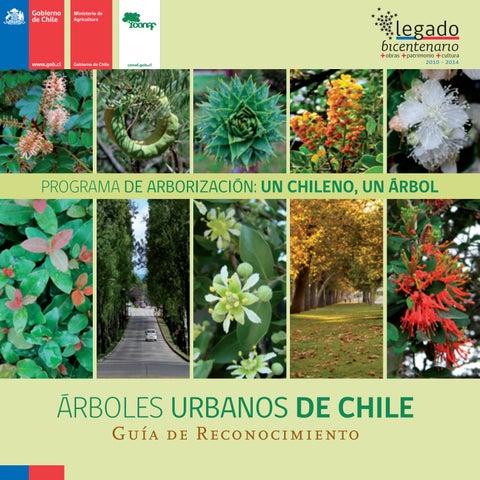 árboles Urbanos De Chile By Fernando Ruz Chileangarden Issuu