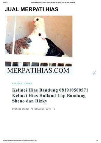 Kelinci Hias Bandung 081910500571 Kelinci Hias Holland Lop Bandung