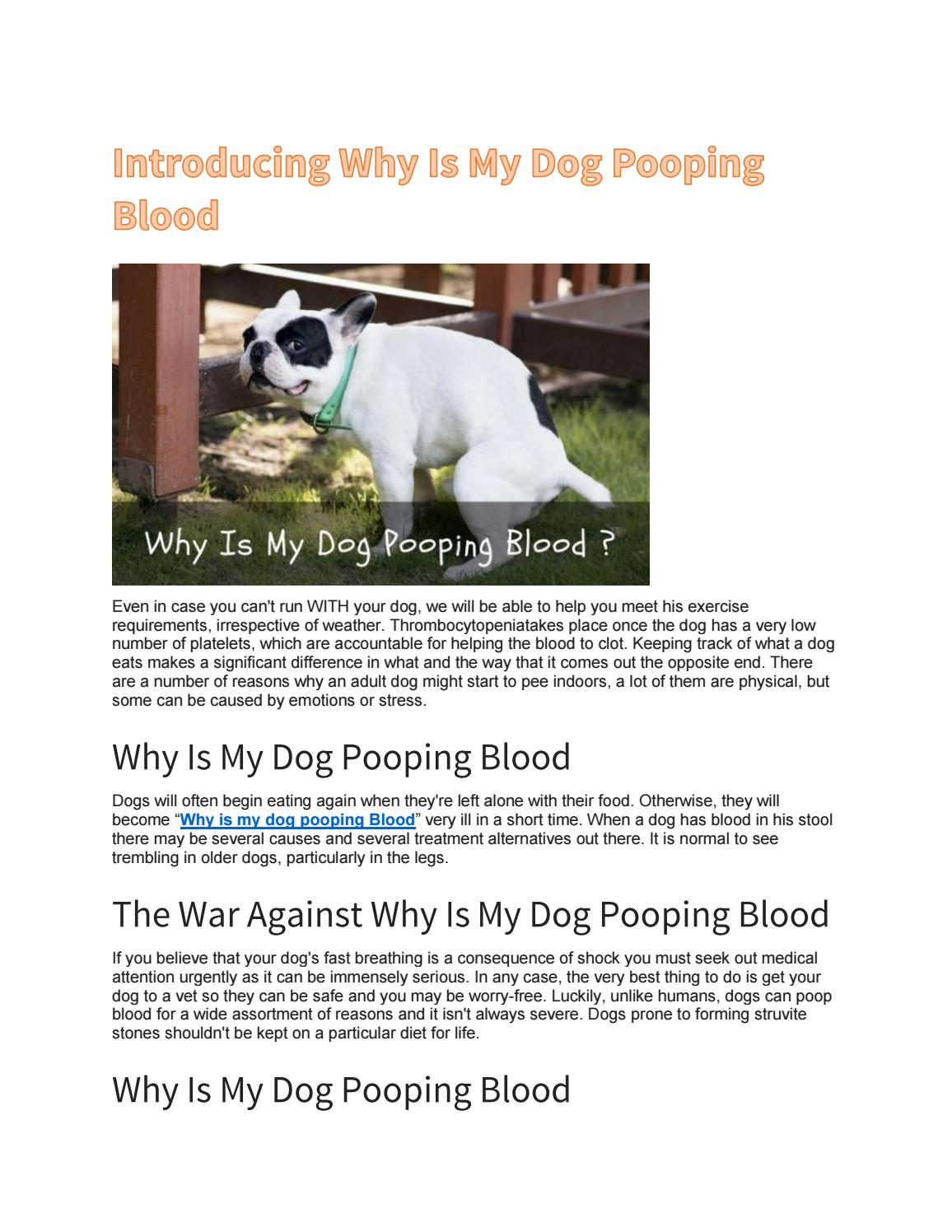 Introducing Why Is My Dog Pooping Blood By Johnslaberge