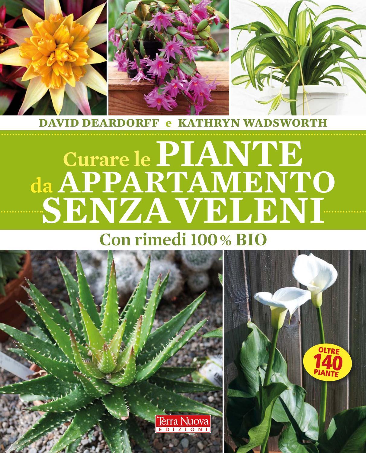 Piante Da Appartamento Ambiente Buio curare le piante da appartamento senza veleni by terra nuova