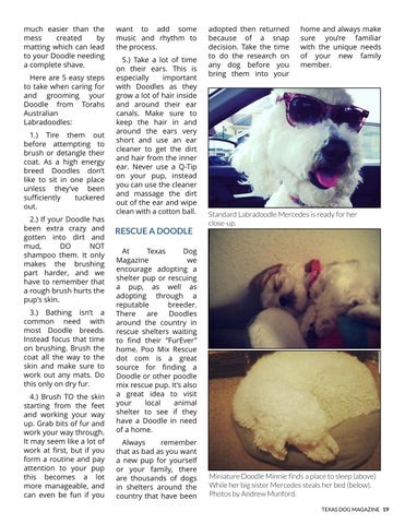 Page 19 of Everything you need to know about the Labradoodle