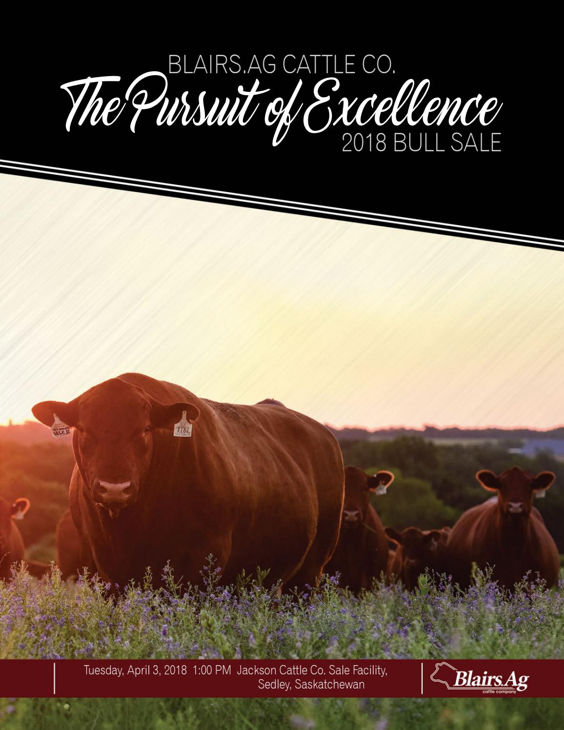 Blairs Ag Cattle Co  The Pursuit of Excellence Bull Sale