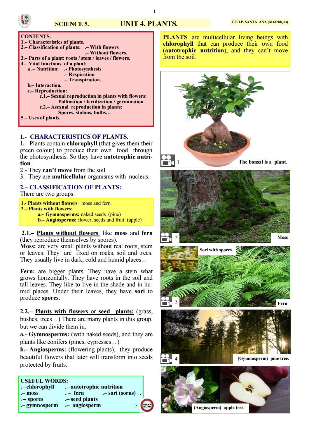 SCIENCE 5  UNIT 4  plants by ceipsantaana1 - issuu