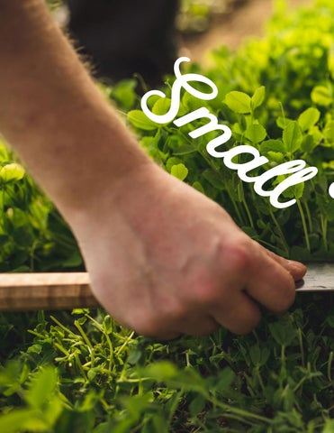 Page 22 of Small Wonders: microgreens pack a big punch