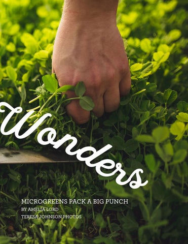 Page 23 of Small Wonders: microgreens pack a big punch