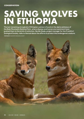 Page 34 of Saving Wolves in Ethiopia