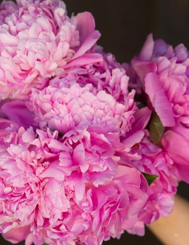 Page 13 of Top 10 Fragrant Plants to Add to Your Garden