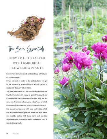 Page 28 of Planting a Bare Root