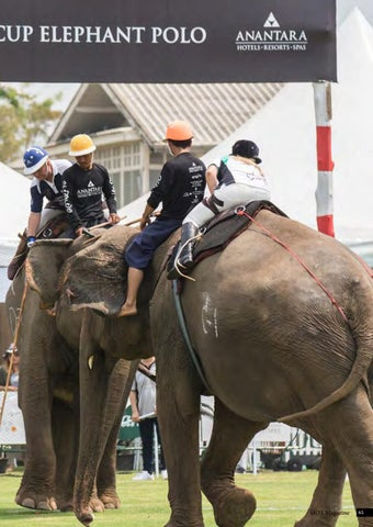 Page 65 of 2018 King's Cup Elephant Polo
